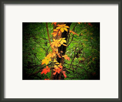 Vine Framed Print By Michael L Kimble