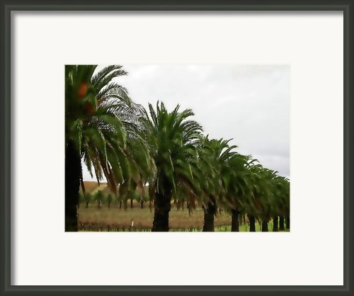Vinescape Framed Print By Douglas Barnard