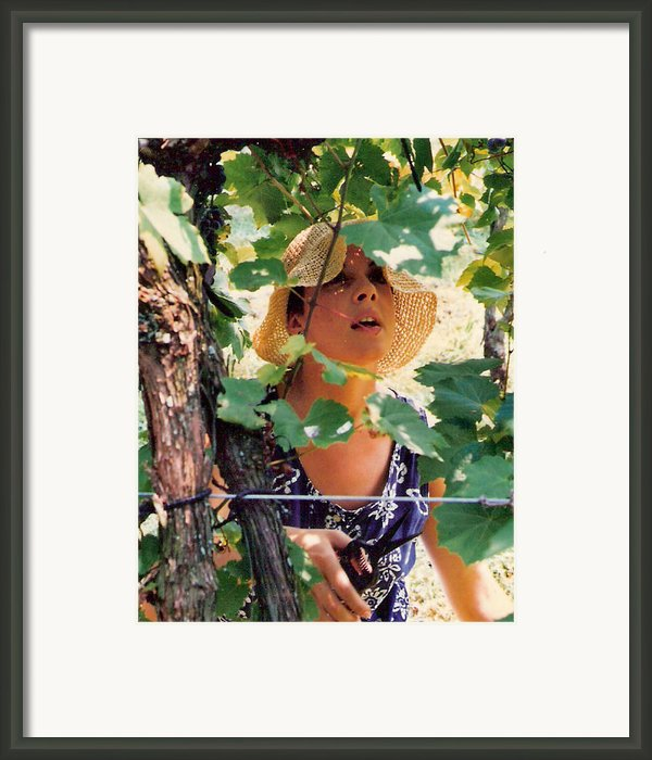 Vineyard Harvest Framed Print By Padre Art