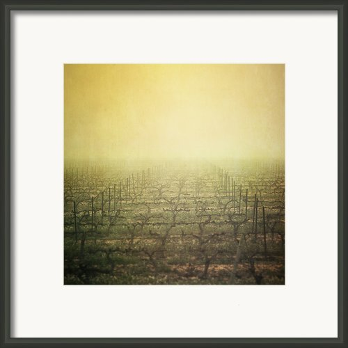 Vineyard In Mist Framed Print By Paul Grand Image