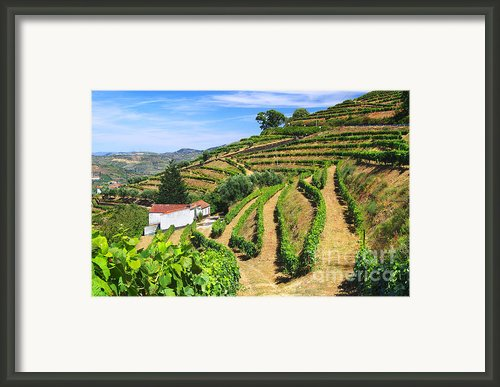 Vineyard Landscape Framed Print By Carlos Caetano