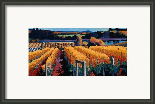 Vineyard Light Framed Print By Christopher Mize