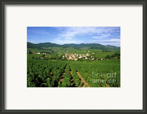 Vineyard Of Beaujolais In France Framed Print By Bernard Jaubert