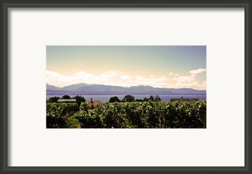 Vineyard On Lake Geneva Framed Print By Jeff Barrett
