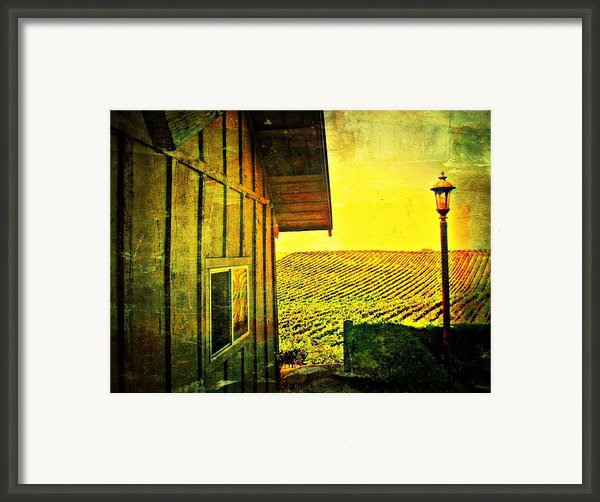Vineyard Reflection Framed Print By Kevin Moore