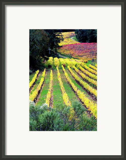 Vineyard Sonoma 7 Framed Print By Anthony George