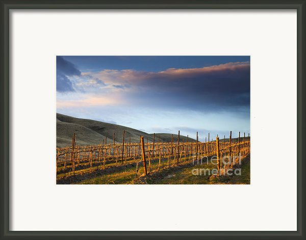 Vineyard Storm Framed Print By Mike  Dawson
