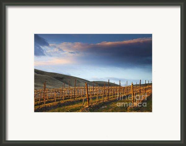 Vineyard Storm Framed Print By Mike  Dawson