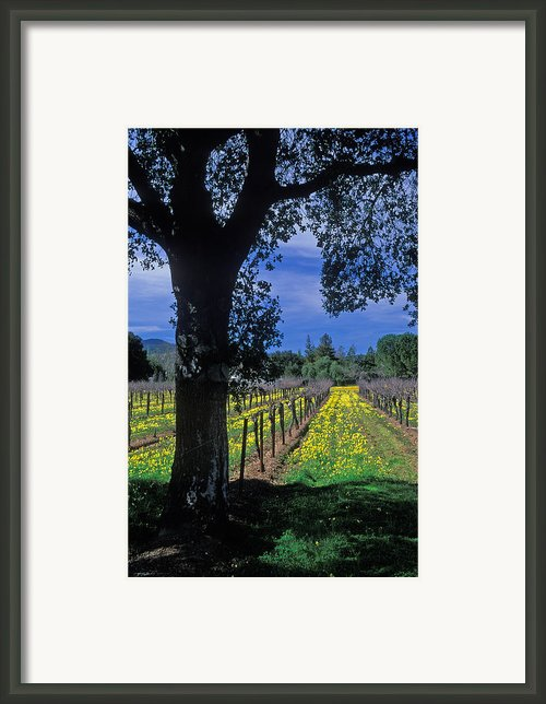 Vineyard View Framed Print By Kathy Yates