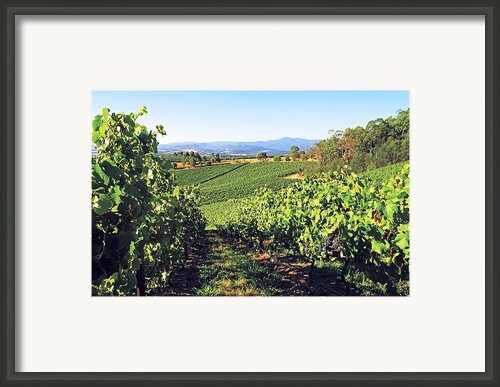 Vineyards In The Yarra Valley, Victoria, Australia Framed Print By Peter Walton Photography