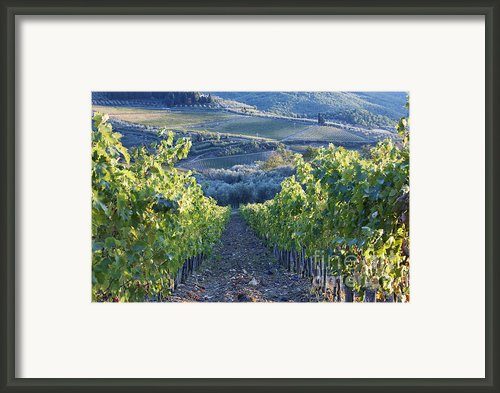 Vineyards Framed Print By Jeremy Woodhouse