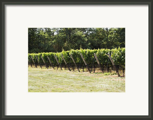 Vineyards Framed Print By Leslie Leda
