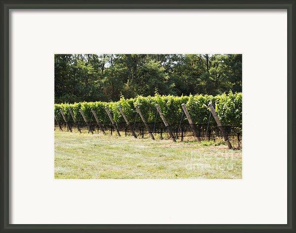 Vineyards Framed Print By Leslie Leda
