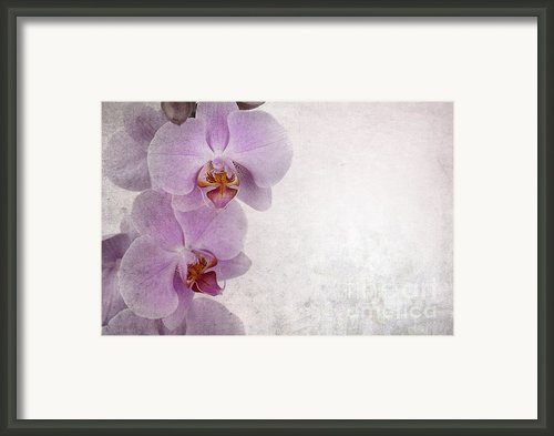 Vintage Orchids Framed Print By Jane Rix