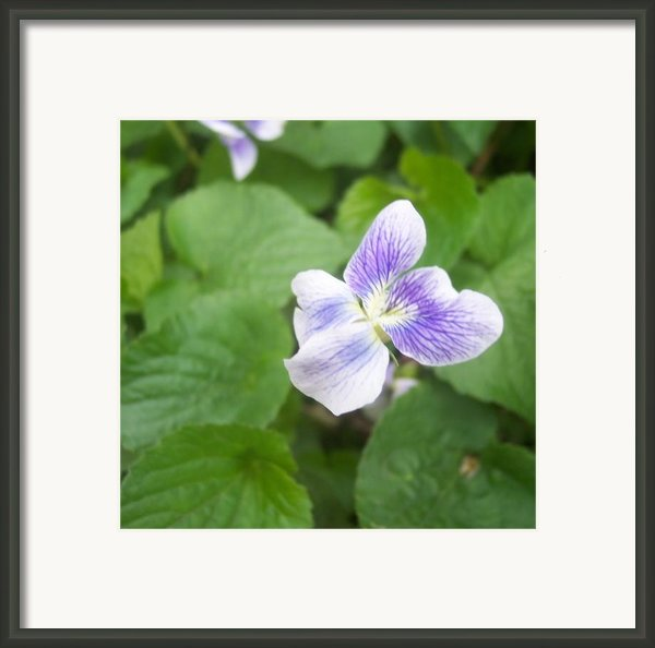Violet 1 Framed Print By Anna Villarreal Garbis