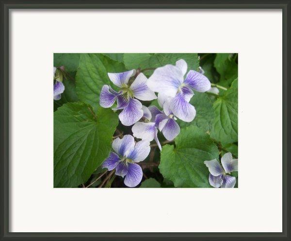 Violets 2 Framed Print By Anna Villarreal Garbis