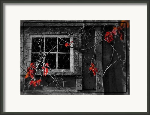 Virginia Creeper Framed Print By Thomas Schoeller