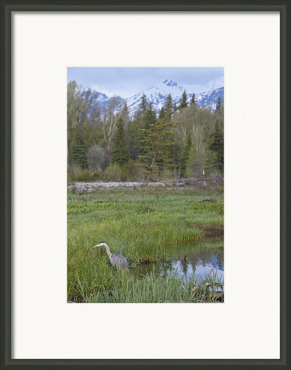 Wading On Breakfast Framed Print By Charles Warren