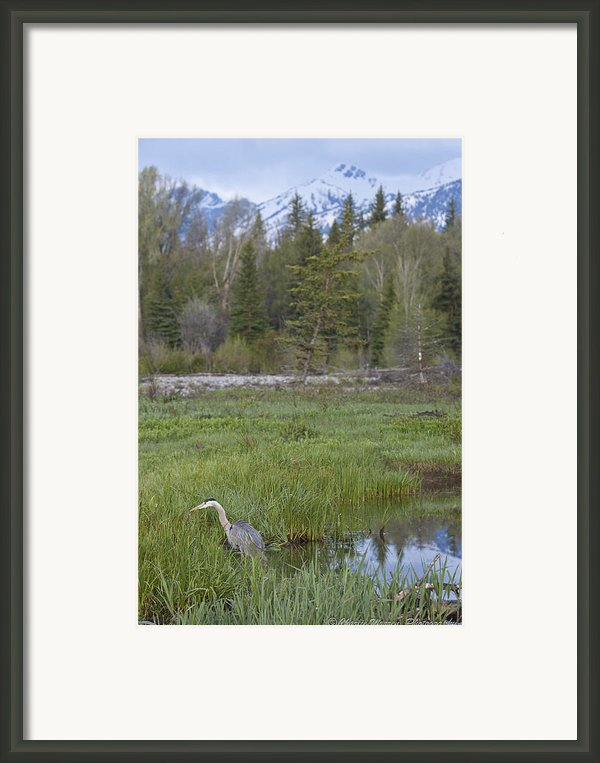 Wading On Breakfast Framed Print By Charles Warren