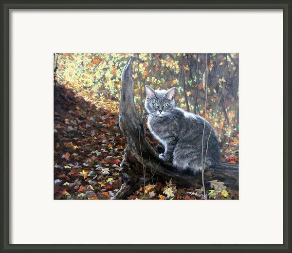 Waiting In The Woods Framed Print By Sandra Chase