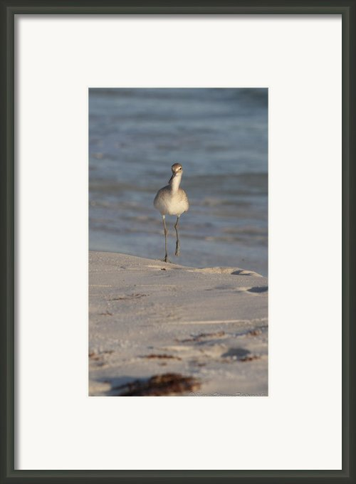 Walking Tall Framed Print By Charles Warren