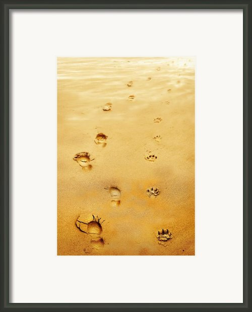 Walking The Dog Framed Print By Mal Bray