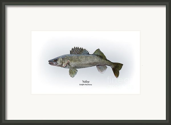Walleye Framed Print By Ralph Martens