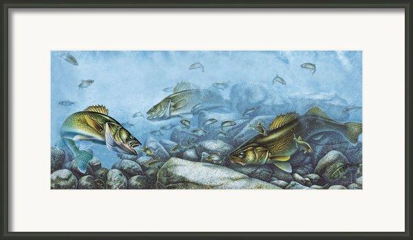 Walleye Reef Framed Print By Jq Licensing
