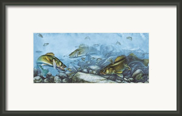 Walleye Reef Framed Print By Jq Licensing