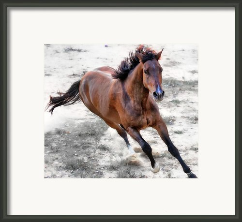Warmblood Horse Galloping Framed Print By Vanessa Mylett