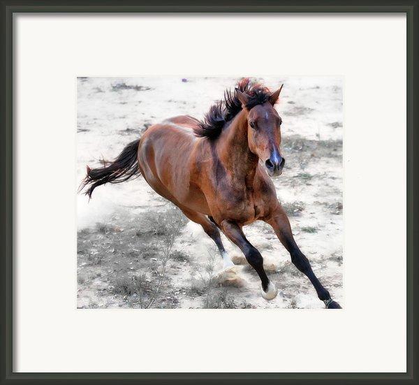 Warmblood Horse Galloping Framed Print By Vanessa Mylett