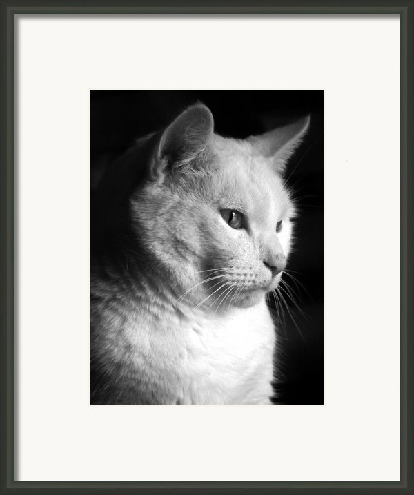 Watchful Framed Print By Bob Orsillo