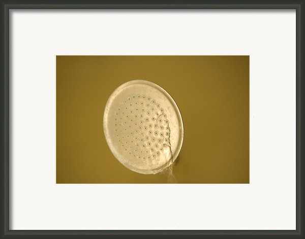 Water Drips From Shower Head Framed Print By Joel Sartore