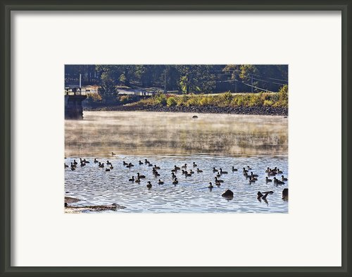 Water Fowl At Lake Wilhelmina Arkansas Framed Print By Douglas Barnard