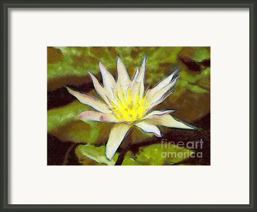 Water Lily Framed Print By Odon Czintos