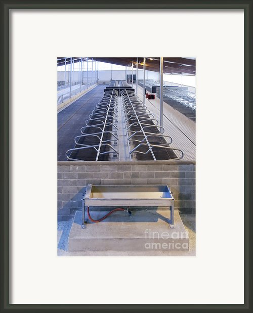 Water Trough And Cattle Cubicles Framed Print By Jaak Nilson