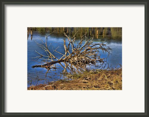 Waterlogged Tree Framed Print By Douglas Barnard