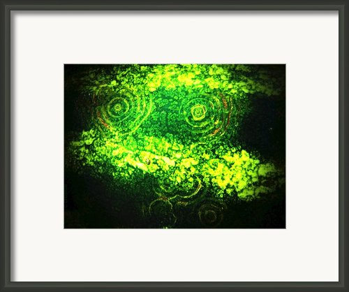 Watermelon Eyes Framed Print By Chris Berry