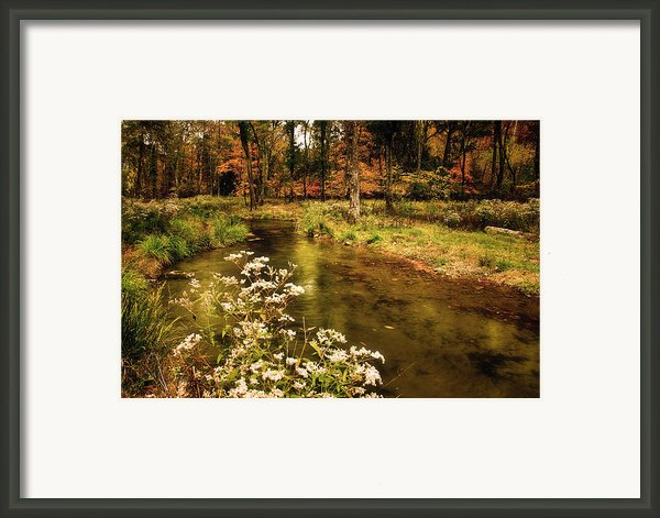 Waterside Flowers Framed Print By Tamyra Ayles