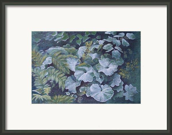 Weeping Ladies Mantle Framed Print By Patsy Sharpe