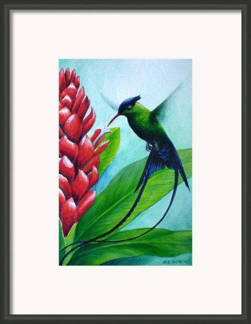 Western Streamertail Hummingbird Framed Print By Christopher Cox