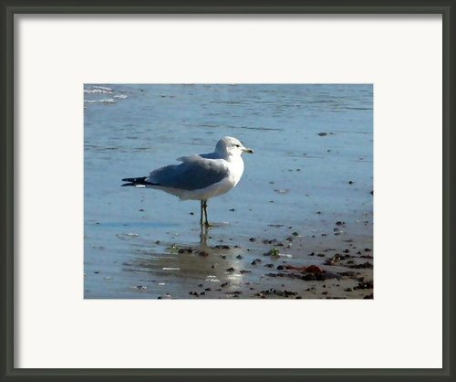 Wet Feet Framed Print By Paul Sachtleben