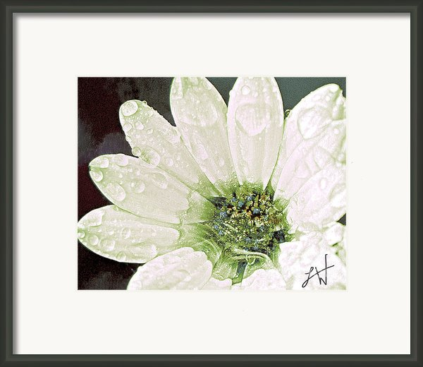 Wet Petals Framed Print By Artist And Photographer Laura Wrede