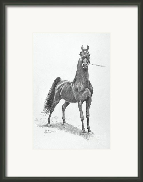 Wgc Night Prowler Framed Print By Jeanne Newton Schoborg