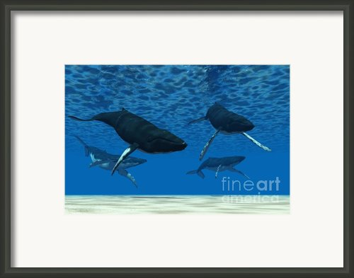 Whale Swim Framed Print By Corey Ford