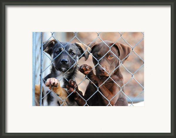 What About Us Framed Print By Jai Johnson