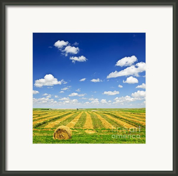 Wheat Farm Field At Harvest Framed Print By Elena Elisseeva