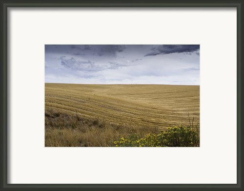 Wheat Fields With Storm Framed Print By John Trax