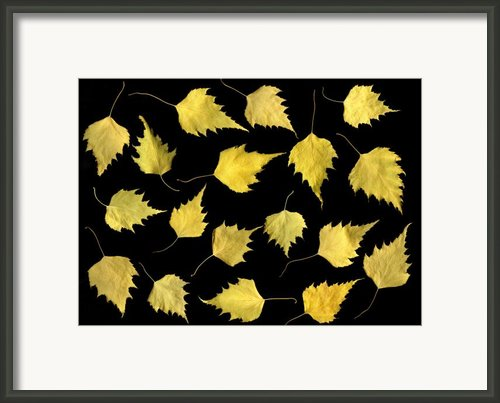 When Leaves Grow Old Framed Print By Christian Slanec