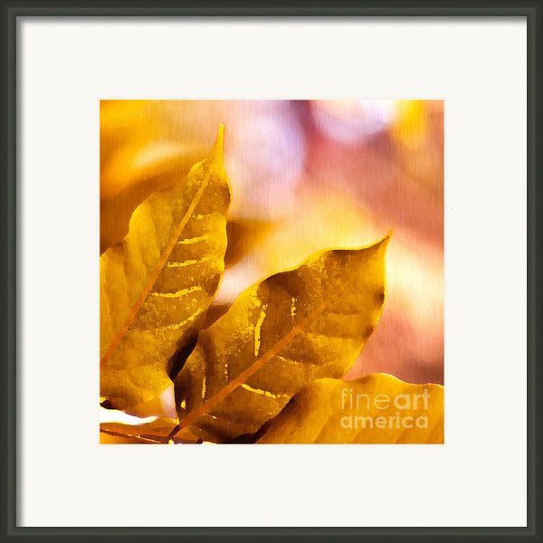 When Leaves Turn Gold Framed Print By Artist And Photographer Laura Wrede